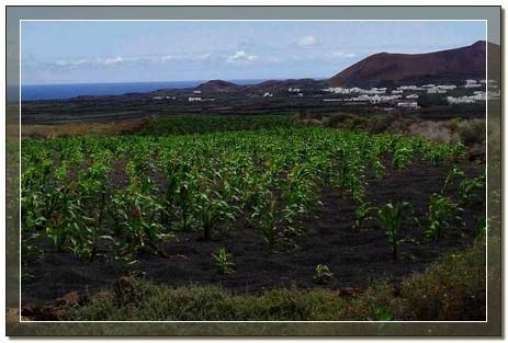 agricultura01